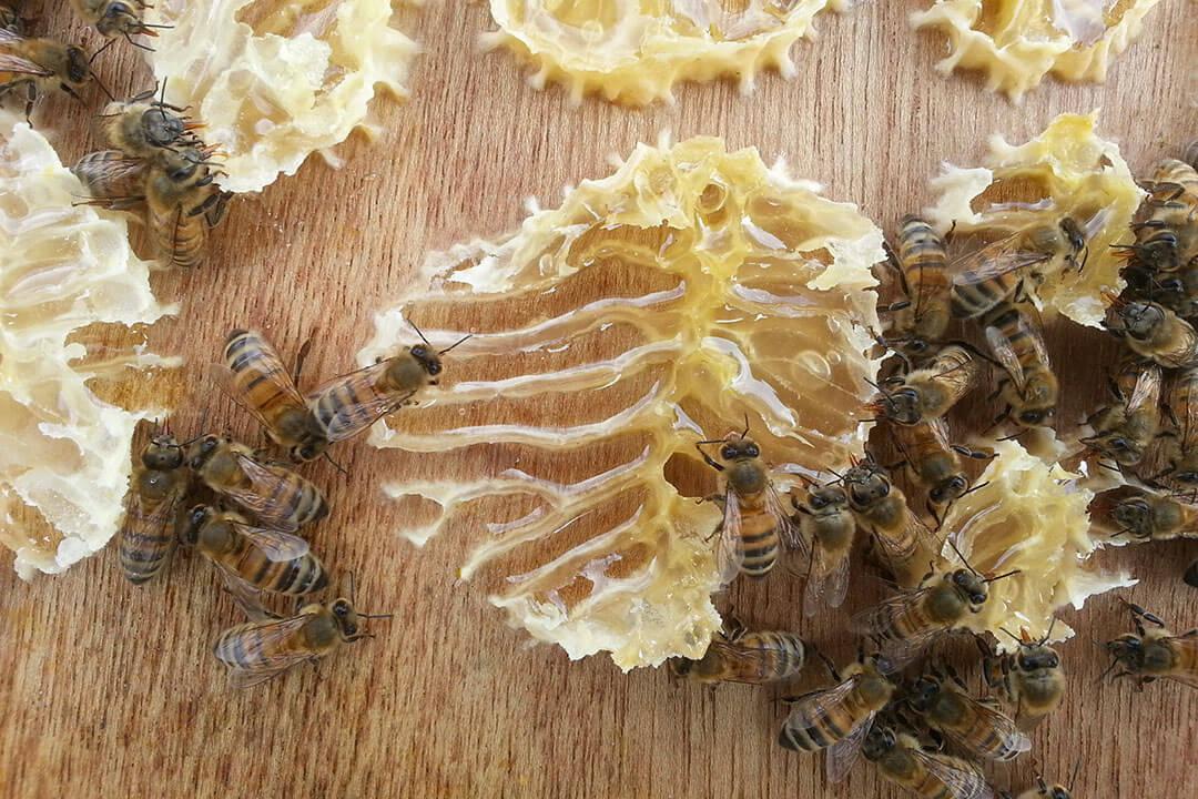 beeodiversity_atelier-des-tanneurs_co2logic_terra-bio_projet_abeilles_alveoles_miel