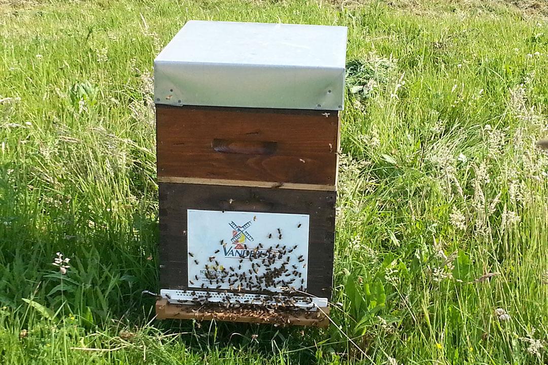 beeodiversity_vendeputte_projet_ruche_herbe_abeilles